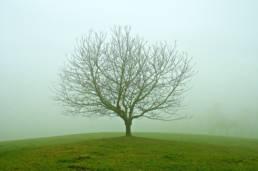 arbre-professionnel-Jean-Gaschet-chambery-savoie---2787-nature