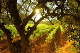 Photographe-professionnel-nature-savoie- vigne chambéry