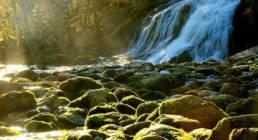 Photographe-nature savoie