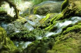 Photographe-professionnel-nature-savoie