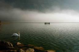 Lac des cygnes aix les bains photographe professionnel